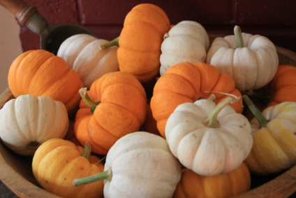 mini pumpkins in abundance
