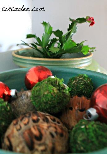 Christmas vignette: Christmas cactus