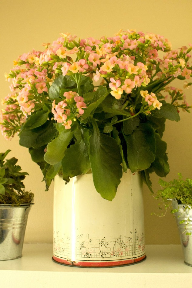 kalanchoe - put a plant in it