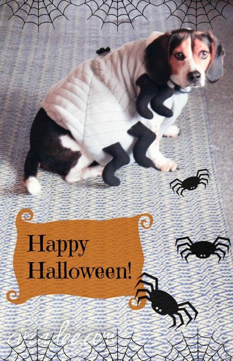 spider beagle halloween Wilson