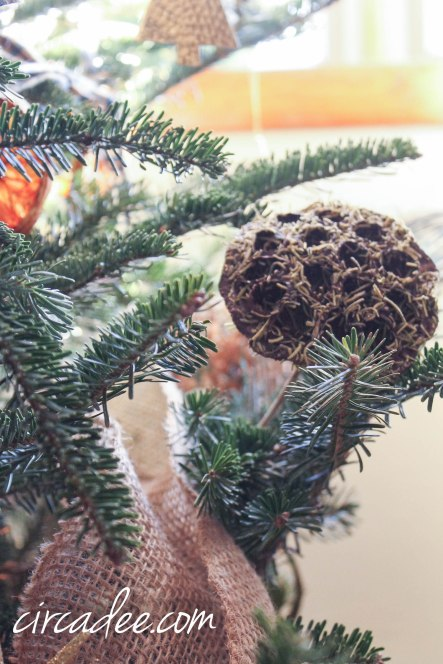 Dried Seed Pod on the Christmas Tree