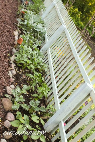 vegetable garden milk painted fence