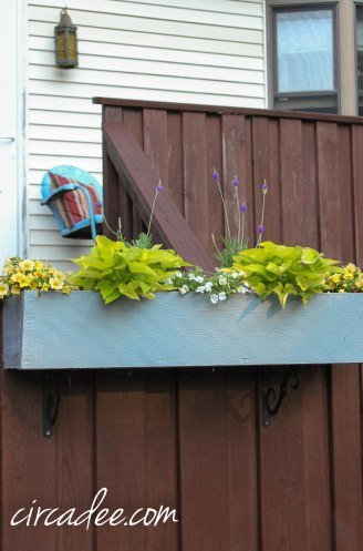 annuals garden box