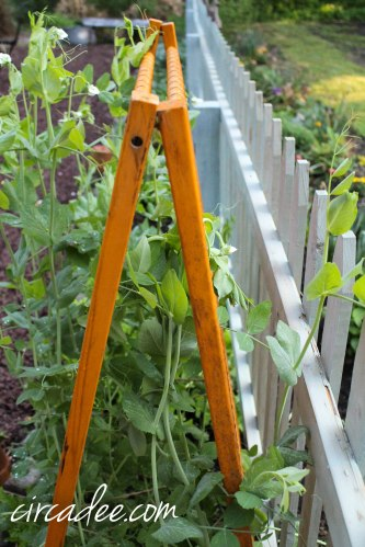 upcycled snap pea trellis - crib rails