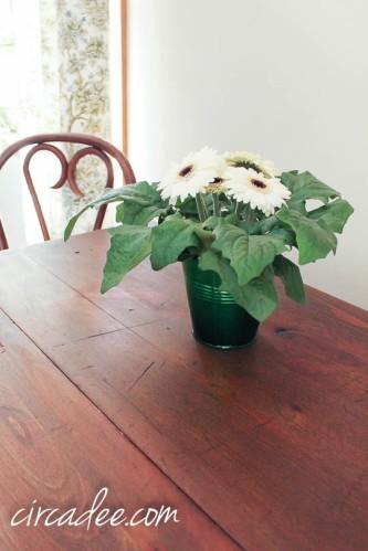 MMSMP hemp oil table top