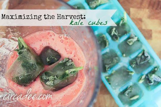 Maximizing the Harvest - kale cubes