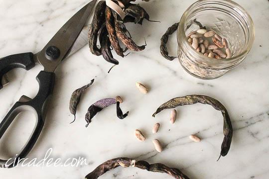 seed saving-4678