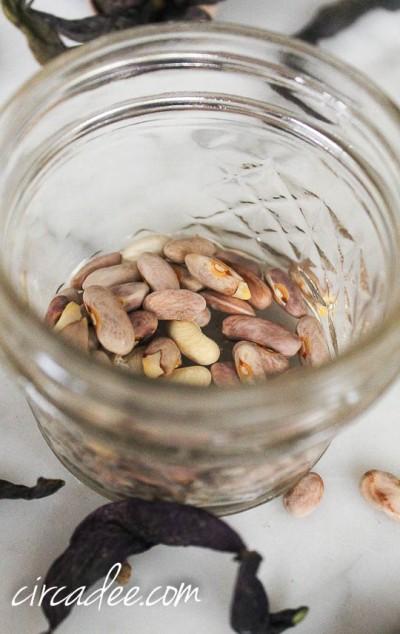 seed saving-4683