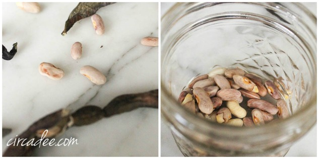 seed saving jar