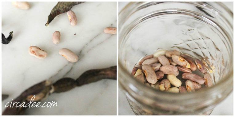 seed saving jar