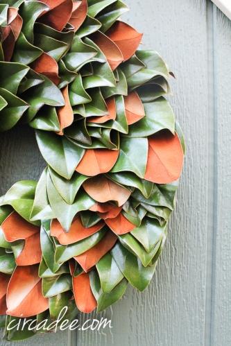 coppery magnolia leaves