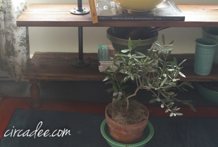 olive tree,  reclaimed wood + pipe plant stand-4999