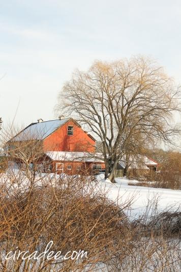 snowy barn-5815