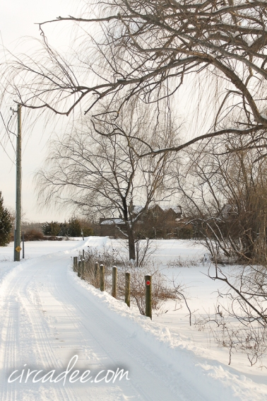 snowstorm-5826