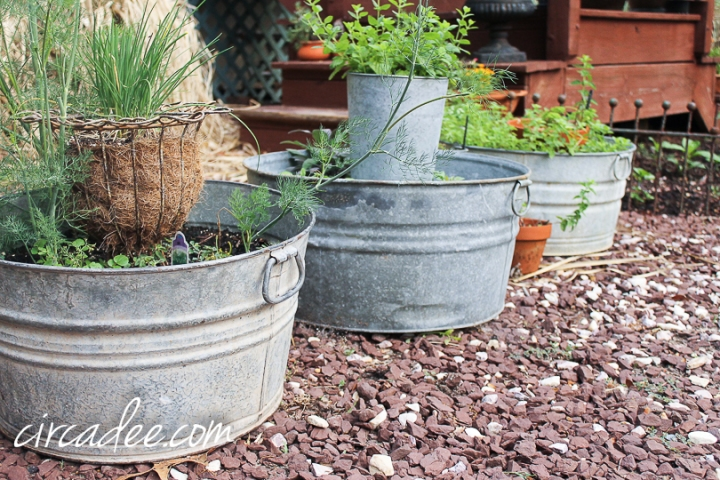 galvanized tub herb garden
