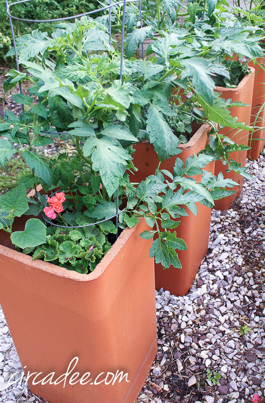 chimney flue liners as raised garden containers