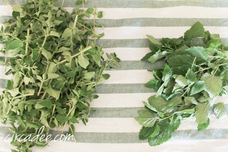 oregano & lemon balm