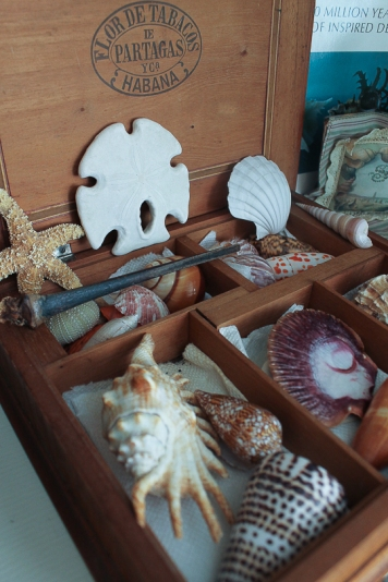 collection of shells