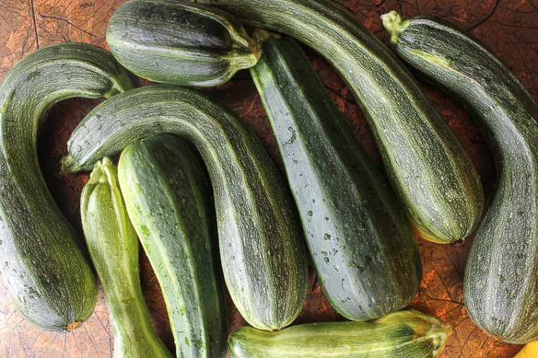 cocozelle zucchini harvest